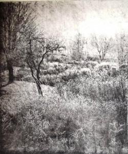Barbara Webb, Steam Gallery